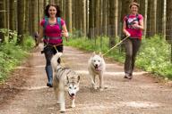 Husky laufen joggen