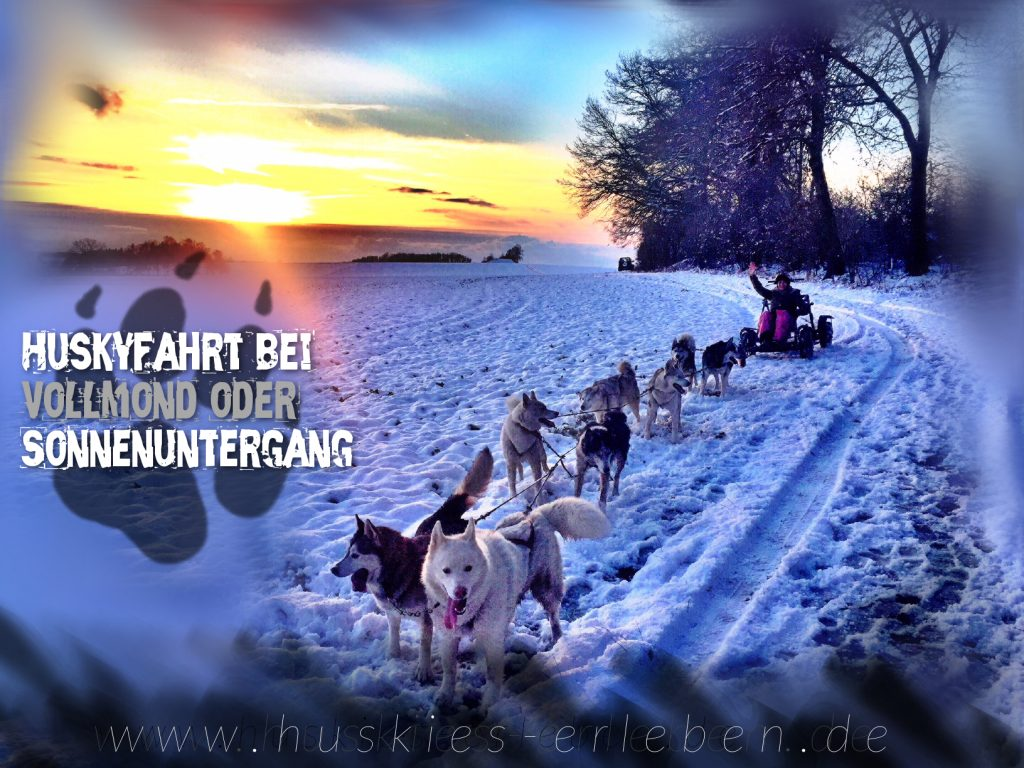 Huskyfahrt bei Vollmond oder Sonnenuntergang